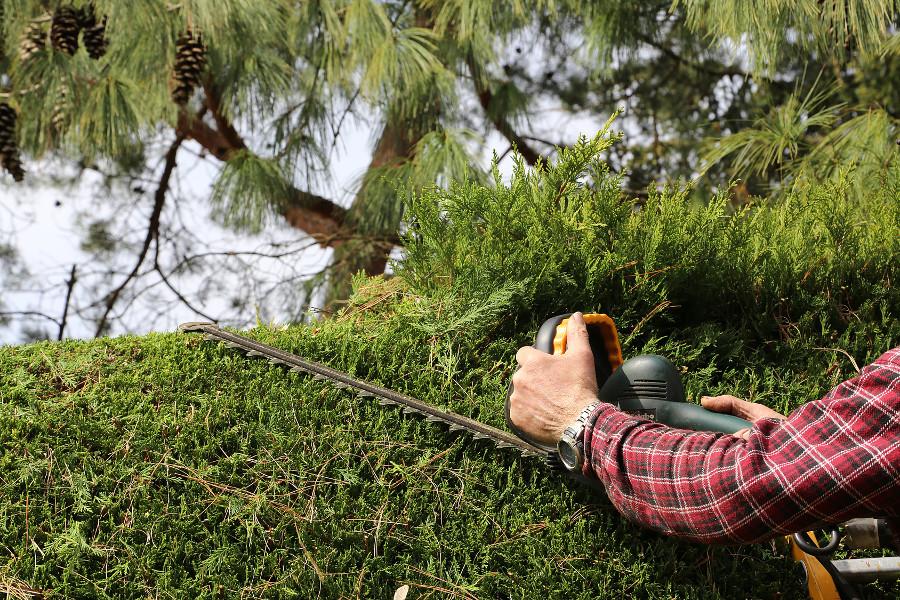 Przycinka krzewów i drzew – czy warto skorzystać z usług profesjonalnej firmy?